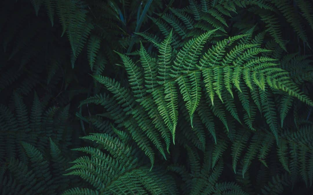 Image of a fern bush.